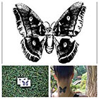 Tattify Butterfly Moth - temporary tattoo (Set of 2)