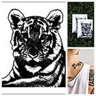 Tattify Tiger - temporary tattoo (Set of 2)