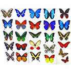 Amazon.com Temporary Butterfly Tattoos (Free Shipping) - 5 Sheets