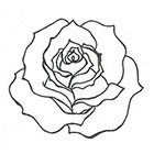 A Shine To It Rose Temporary Tattoo Floral Hand Drawn Illustration