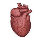 happytatts valentine temporary tattoo, anatomical heart, vintage inspired fake tattoo, heart tattoo for him dude man, bachelor party tattoo, happytatts