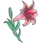 de Krantenkapper Lily Temporary Tattoo