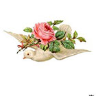 Wickedly Lovely Valentine Dove, Dove with pink rose, Valentine tattoo, Vintage, Body Art, Wickedly Lovely Skin Art Temporary tattoo (includes two tattoos)