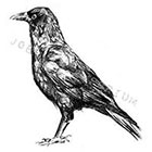 JoellesEmporium Crow Temporary Tattoo, Large Temporary Tattoo, Tattoo Temporary, Bird Art, Black, Bird Temporary Tattoo