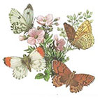 A Shine To It Temporary Tattoo Butterfly Vintage Book Illustration Floral