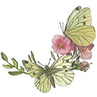 A Shine To It Temporary Tattoo Butterfly Vintage Book Illustration Pink and Yellow