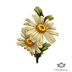 Wickedly Lovely Vintage Daisies Wickedly Lovely Skin Art Temporary Tattoo