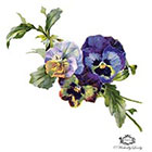 Wickedly Lovely Vintage pansies Wickedly Lovely Skin Art Temporary Tattoo