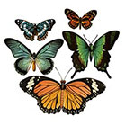 The Fickle Tattoo Vintage Large Butterfly Temporary Tattoos -