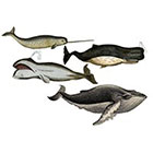 The Fickle Tattoo Vintage Whale Temporary Tattoos -