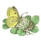 A Shine To It Yellow Butterfly Temporary Tattoo Vintage Book Illustration Floral