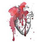 The Fickle Tattoo Vintage Watercolor Anatomical Heart Temporary Tattoo -