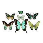 The Fickle Tattoo Vintage Green Butterfly Temporary Tattoos -