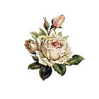 The Fickle Tattoo Vintage Rose Temporary Tattoo -