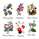 TattooNbeyond Temporary Tattoo - 6 Vintage Bouquets