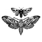 Tattoo LifeStyle Sets Butterflies temporary tattoos