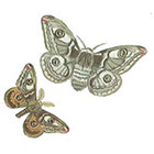 A Shine To It Moth Temporary Tattoo from Vintage Book Illustration Silver and Brown