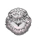 Soma Art Tattoo Eagle Temporary Tattoo - SomaArtTattoo Temporary Tattoo - wrist quote tattoo body sticker fake tattoo wedding tattoo small tattoo