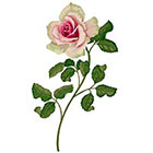 Ombeyond TEMPORARY TATTOO - Vintage Rose