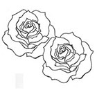 A Shine To It Roses Temporary Tattoo Hand Drawn Illustration Floral