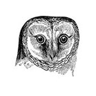TattooNbeyond Temporary Tattoo - Vintage Owl