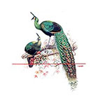 WildLifeDream Two Peacocks - Temporary tattoo
