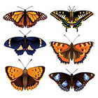 WildLifeDream Set of 6 butterflies - Temporary tattoos
