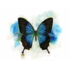 TattooNbeyond Temporary Tattoo - Watercolor Butterfly