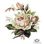 Wickedly Lovely Delicate palest pink rose, Vintage, floral tattoo, Body Art, Wickedly Lovely Skin Art Temporary Tattoo