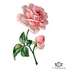 Wickedly Lovely Victorian Pink rose Book illustration, Wintage, floral tattoo, Body Art, Wickedly Lovely Skin Art Temporary Tattoo