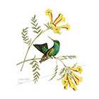 WildLifeDream Vintage hummingbird and flowers - Temporary tattoo