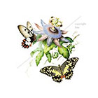 WildLifeDream Vintage butterflies and flowers - Temporary tattoo