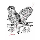 WildLifeDream Owls - Temporary tattoo