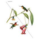 WildLifeDream Hummingbirds - Temporary tattoo