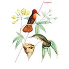 WildLifeDream Hummingbirds - Temporary tattoo