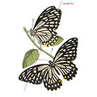 WildLifeDream Butterflies - Temporary tattoo