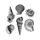 The Fickle Tattoo Vintage Shells Temporary Tattoos - She Sells Seashells!