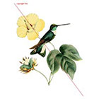 WildLifeDream Hummingbird - Temporary tattoo