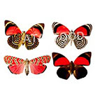 Atattood Butterflies Set/4 Temporary Tattoos