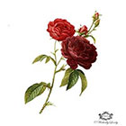 Wickedly Lovely Roses are Red, Red roses tattoo, Vintage tattoo, Fine Art Rose, floral tattoo, Body Art, Wickedly Lovely Skin Art Temporary Tattoo