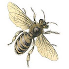 Taboo Tattoo 2 Vintage Honey Bee Temporary Tattoo, various sizes available
