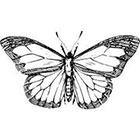 Taboo Tattoo Butterfly Temporary Tattoo, various sizes available
