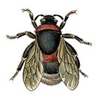 Taboo Tattoo 2 Vintage Bee Temporary Tattoo, various sizes available in color