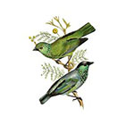 Arrow Tattoo Two Green Birds Vintage Flowers temporary tattoo Pattern Tattoo Temporary Tattoo wrist ankle body sticker fake tattoo