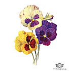 Wickedly Lovely Vintage Pansy temporaray tattoo, Pansy tattoo, Vintage tattoo, Body Art, Wickedly Lovely Skin Art Temporary Tattoo