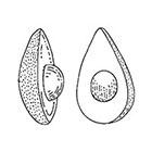 TattooWhatever Avocado