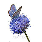 Atattood Blue Butterfly and Flower Temporary Tattoo
