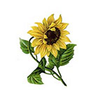 Taboo Tattoo 2 Sunflower Temporary Tattoo, various sizes available Wrist Finger Ankle