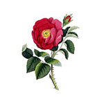 Arrow Tattoo Vintage Rose temporary tattoo Pattern Tattoo Temporary Tattoo wrist ankle body sticker fake tattoo poppy red purple