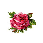 Taboo Tattoo 2 Elegant Vintage Red Rose Temporary Tattoo, various sizes available Design 1
